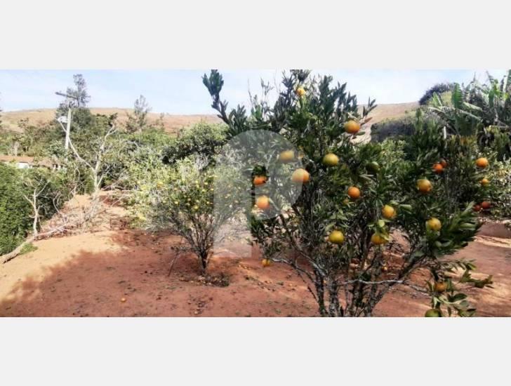 Fazenda / Sítio à venda em Pedro do Rio, Petrópolis - RJ - Foto 11